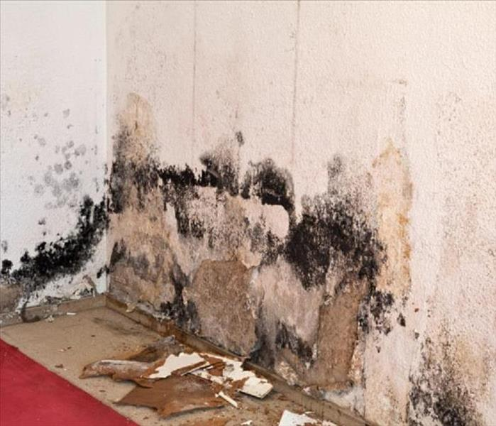 Mold remediation in Woolwich NJ,  Before
