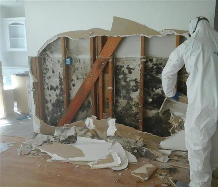 Mold remediation and damage in Woolwich NJ