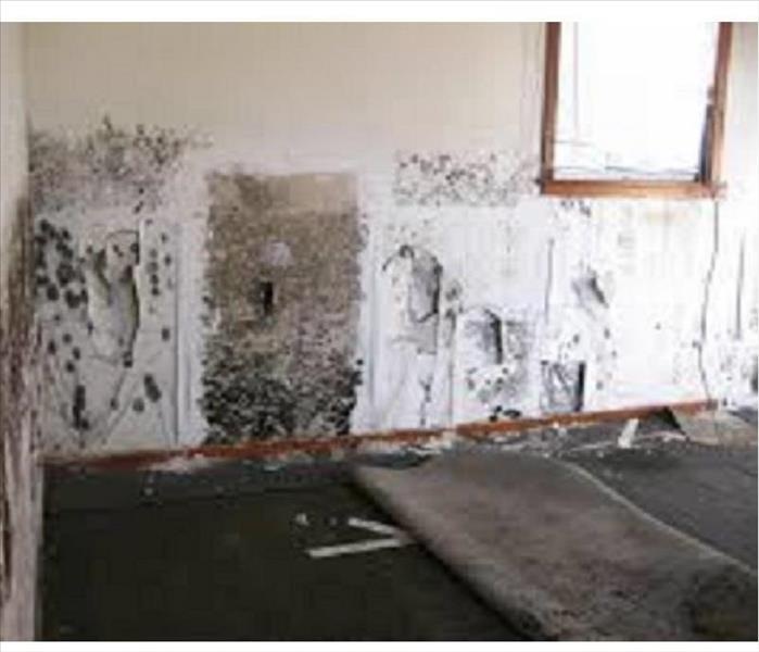 Mold remediation and damage in Woolwich NJ,